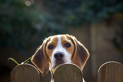 How to Choose the Ideal Fence for Your Dog